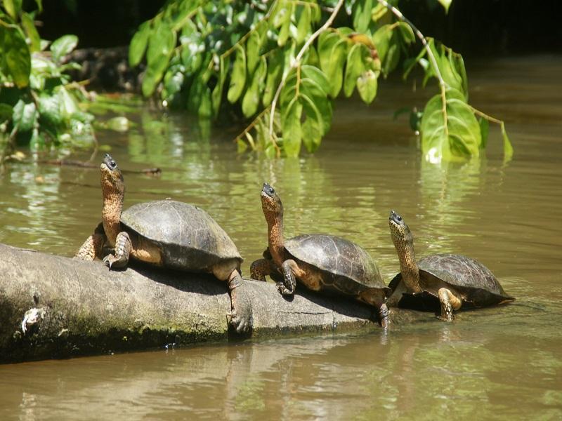 Parco Nazionale del Tortuguero