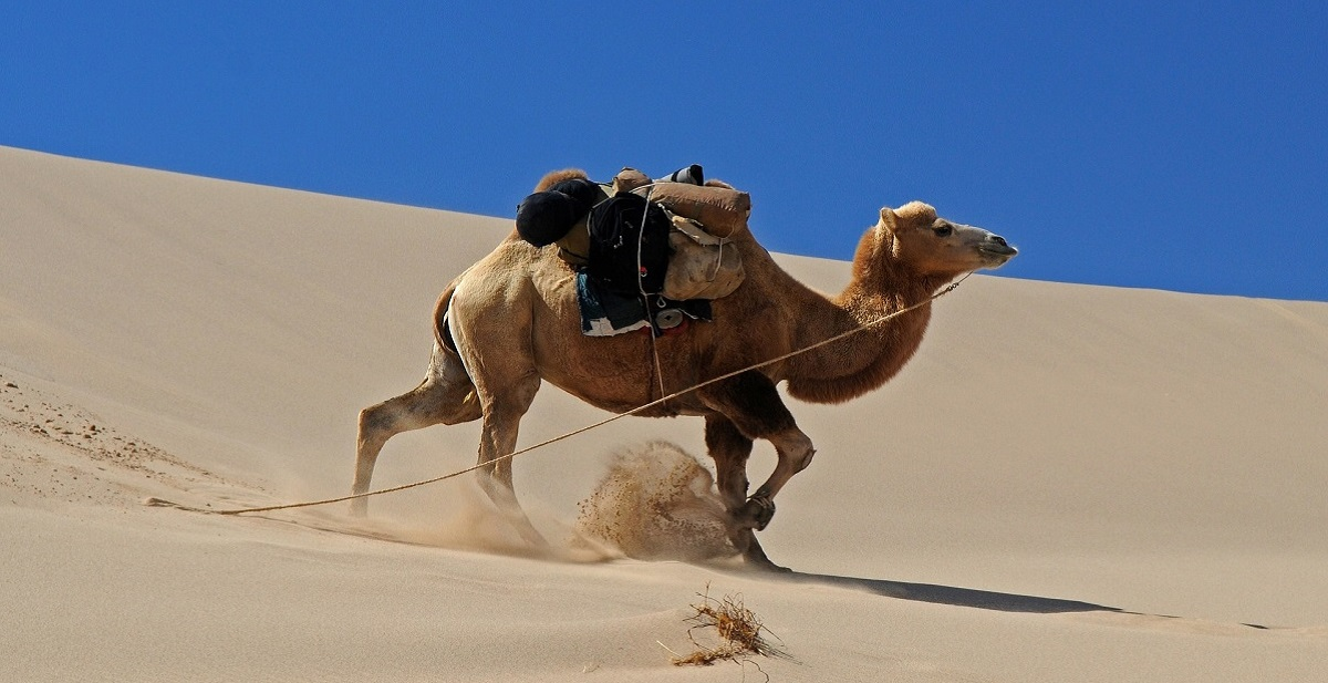 Khongoryn Sand Dunes