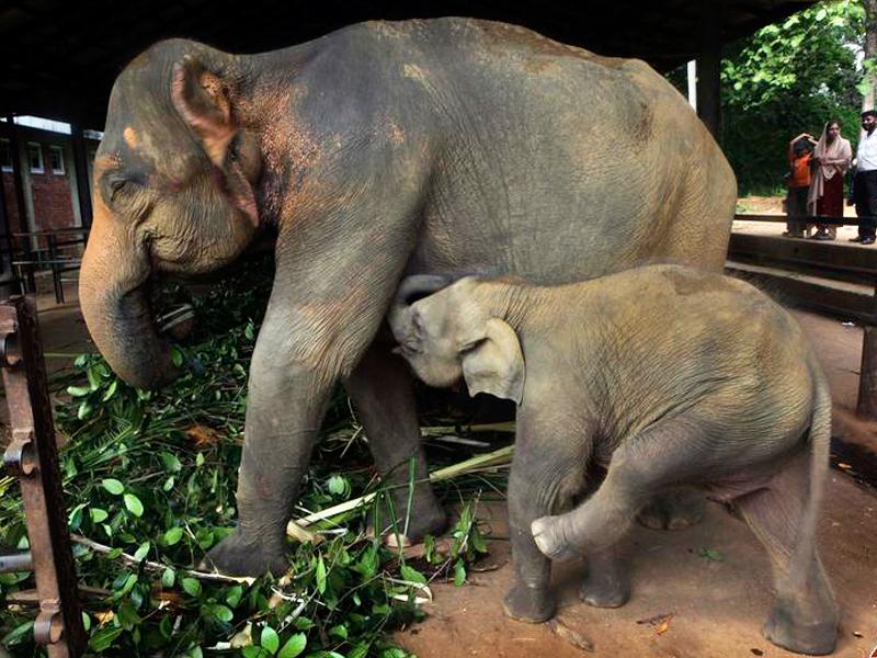 Orfanotrofio degli Elefanti