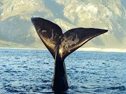 Il transito delle balene